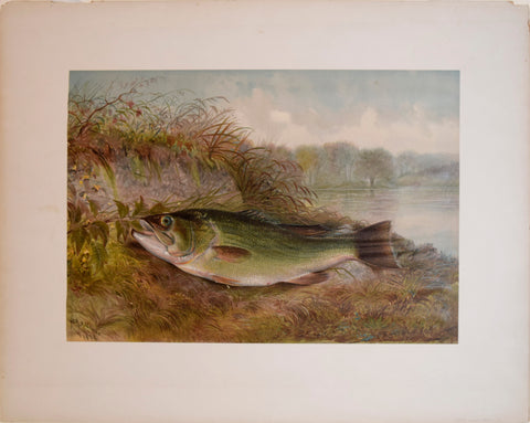Copy of Samuel A. Kilbourne (1836-1881), Large Mouth Bass