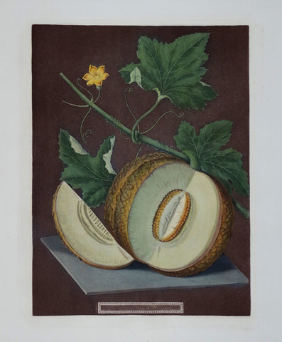 George Brookshaw (1751-1823), Melon, Pl LXIX