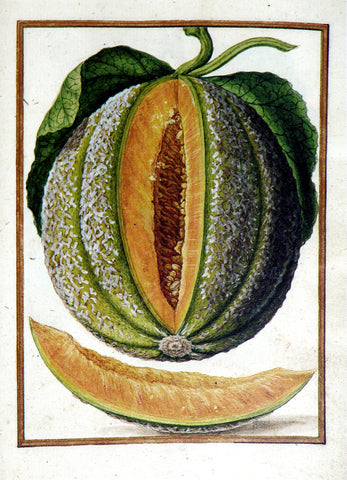 Jacques le Moyne de Morgues (French, ca. 1533-1588), Melon