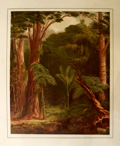 John Gully (1819-1888), New Zealand Forest Vegetation