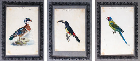 Richard Polydore Nodder (British, fl. 1793–1820) A Collection of Ornithological Watercolors