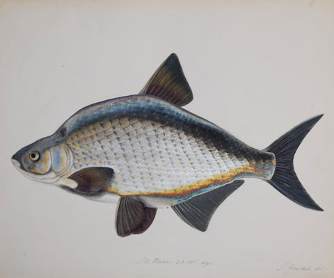Sarah Bowdich Lee (1791-1856), Bream