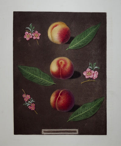 George Brookshaw (1751-1823), Peaches, Pl XXIX