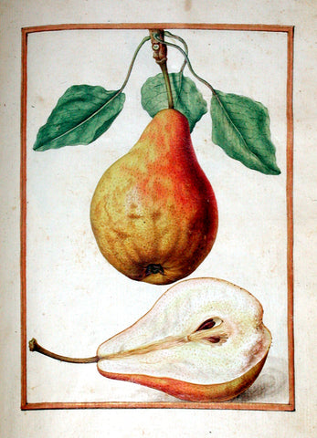 Jacques le Moyne de Morgues (French, ca. 1533-1588), Pear