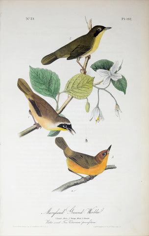 John James Audubon (American, 1785-1851), Pl 102 - Maryland Ground-Warbler