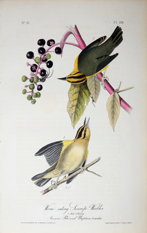 John James Audubon (American, 1785-1851), Pl 105 - Worm-eating Swamp Warbler