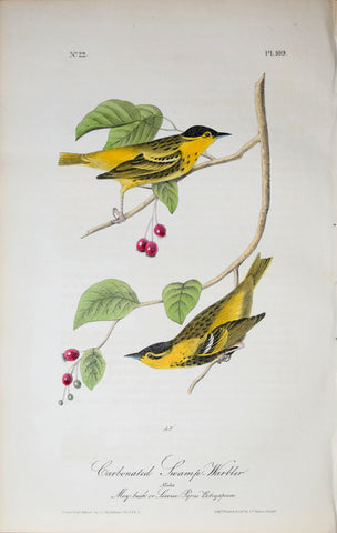 John James Audubon (American, 1785-1851), Pl 109 - Carbonated Swamp-Warbler