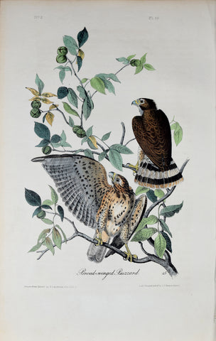 John James Audubon (American, 1785-1851), Pl 10 - Broad-winged Buzzard