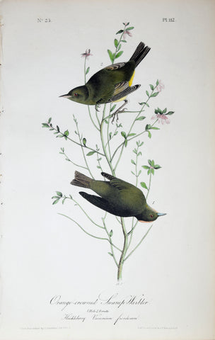 John James Audubon (American, 1785-1851), Pl 112 - Orange-crowned Swamp-Warbler
