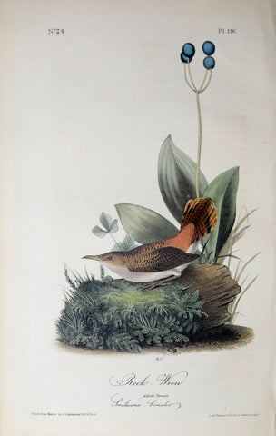 John James Audubon (American, 1785-1851), Pl 116 - Rock Wren