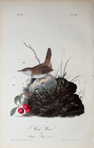 John James Audubon (American, 1785-1851), Pl 119 - Wood Wren