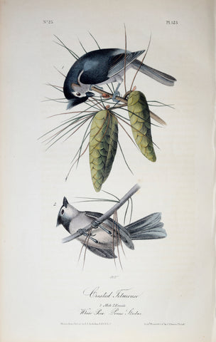 John James Audubon (American, 1785-1851), Pl 125 - Crested Titmouse