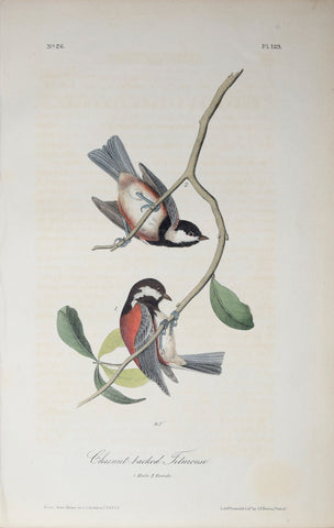 John James Audubon (American, 1785-1851), Pl 129 - Chestnut-backed Titmouse
