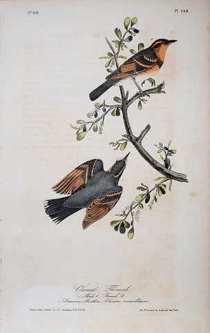John James Audubon (American, 1785-1851), Pl 143 - Varied Thrush