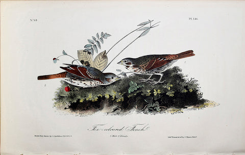 John James Audubon (American, 1785-1851), Pl 186 - Fox-coloured Finch