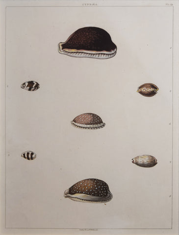George Perry ( fl. 1810), Plate 19