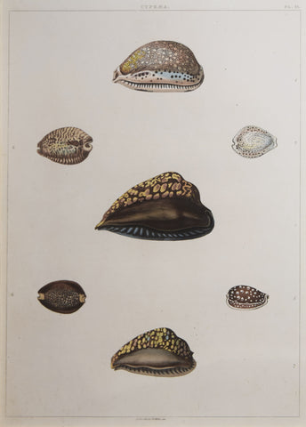 George Perry ( fl. 1810), Plate 21