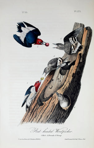 John James Audubon (American, 1785-1851), Pl 271 - Red-headed Woodpecker