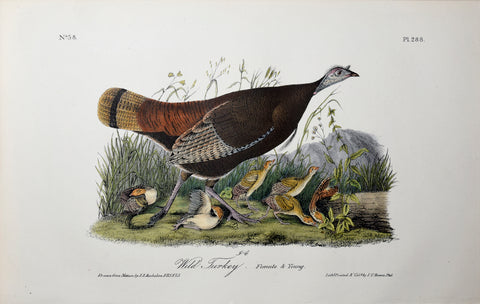 John James Audubon (American, 1785-1851), Pl 288 - Wild Turkey - Female and Young