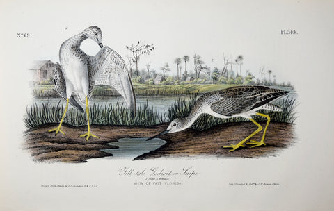 John James Audubon (American, 1785-1851), Pl 345 - Tell-tale Godwit or Snipe