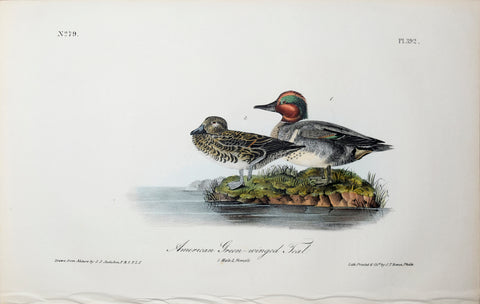 John James Audubon (American, 1785-1851), Pl 392 - American Green-winged Teal