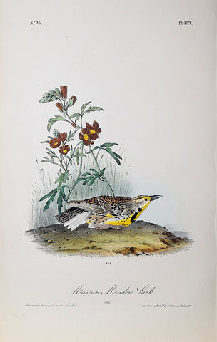 John James Audubon (American, 1785-1851), Pl 489 - Missouri Meadow Lark