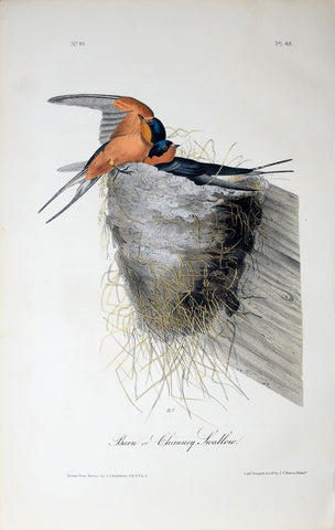 John James Audubon (American, 1785-1851), Pl 48 - Barn or Chimney Swallow