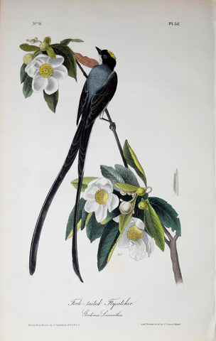 John James Audubon (American, 1785-1851), Pl 52 - Fork-tailed Flycatcher