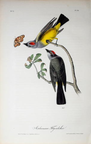 John James Audubon (American, 1785-1851), Pl 54 - Arkansaw Flycatcher