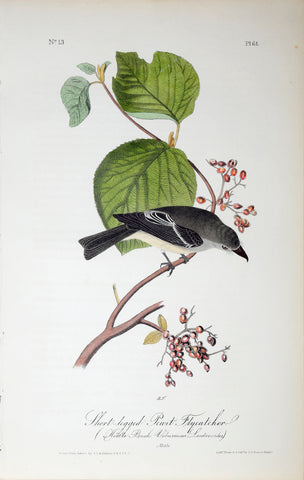 John James Audubon (American, 1785-1851), Pl 61 - Short-legged Pewit Flycatcher