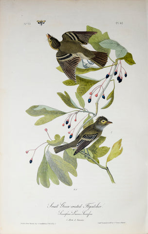 John James Audubon (American, 1785-1851), Pl 62 - Small Green-crested Flycatcher
