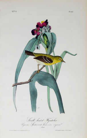 John James Audubon (American, 1785-1851), Pl 67 - Small-headed Flycatcher