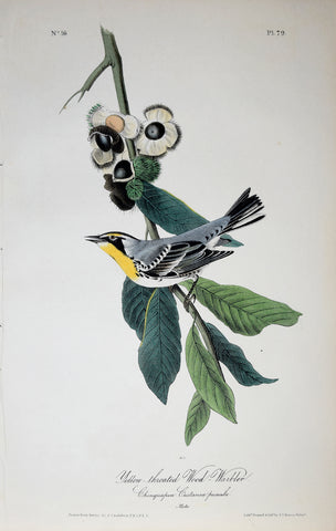 John James Audubon (American, 1785-1851), Pl 79 - Yellow-throated Wood-Warbler