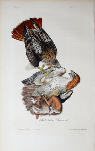 John James Audubon (American, 1785-1851), Pl 7 - Red-tailed Buzzard