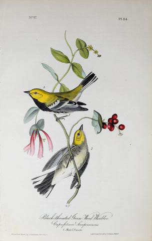 John James Audubon (American, 1785-1851), Pl 84 - Black-throated Green Wood-Warbler