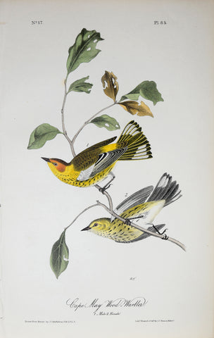 John James Audubon (American, 1785-1851), Pl 85 - Cape May Wood-Warbler