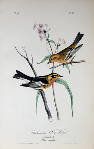 John James Audubon (American, 1785-1851), Pl 87 - Blackburnian Wood-Warbler