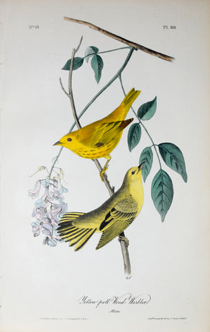 John James Audubon (American, 1785-1851), Pl 88 - Yellow-poll Wood Warbler