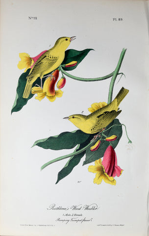 John James Audubon (American, 1785-1851), Pl 89 - Rathbone's Wood-Warbler