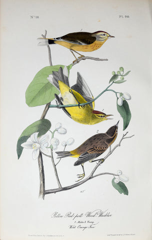 John James Audubon (American, 1785-1851), Pl 90 - Yellow Red-poll Wood-Warbler