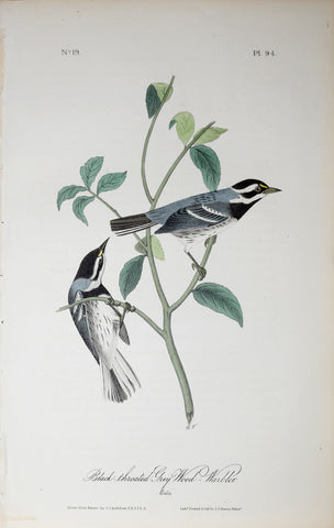 John James Audubon (American, 1785-1851), Pl 94 - Black-throated Grey Wood-Warbler