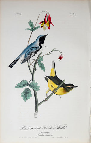 John James Audubon (American, 1785-1851), Pl 95 - Black-throated Blue Wood-Warbler