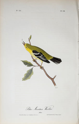 John James Audubon (American, 1785-1851), Pl 98 - Blue Mountain Warbler