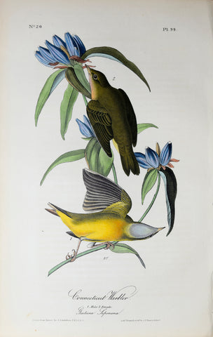 John James Audubon (American, 1785-1851), Pl 99 - Connecticut Warbler