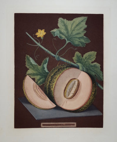 "George Brookshaw (1751-1823), Pl LXIX, ""Melon"""