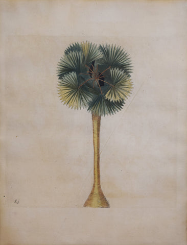 Mark Catesby (ca. 1679-1749), Plate 84