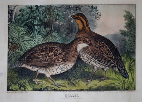 Nathaniel Currier (1813-1888) & James Ives (1824-1895), Quail: Or Virginia Patridge