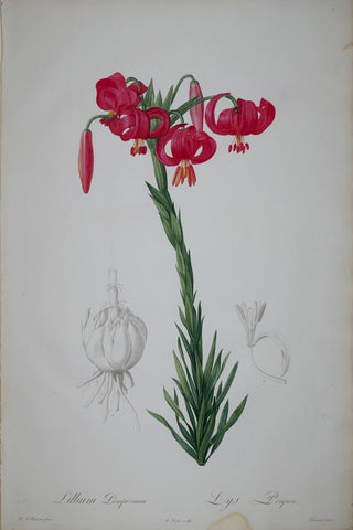 Pierre Joseph Redouté (1759-1840), Red Lily, Plate 7