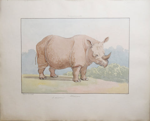 Charles Hamilton Smith (1776-1859), Rhinoceros of Asia