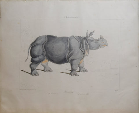 Charles Hamilton Smith (1776-1859), Rhinoceros of India